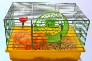 How Often Should You Clean a Hamster's Cage?