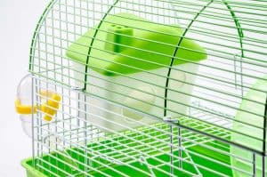 What Size Cage Does A Hamster Need