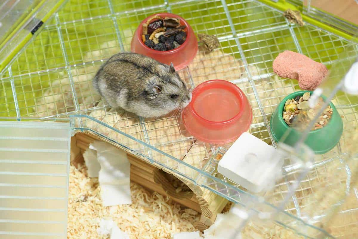 Hamster is standing next to the plastic bowl of food and water in the cage