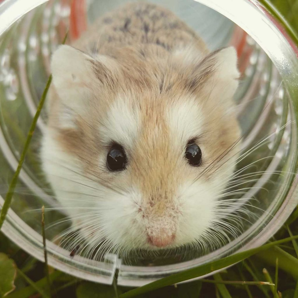 X Hamster Tube.Com