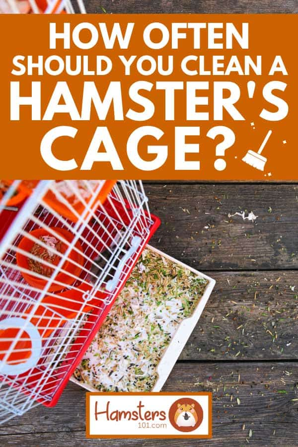 Dirty hamster cage brought outside to be cleaned, How Often Should You Clean a Hamster's Cage?