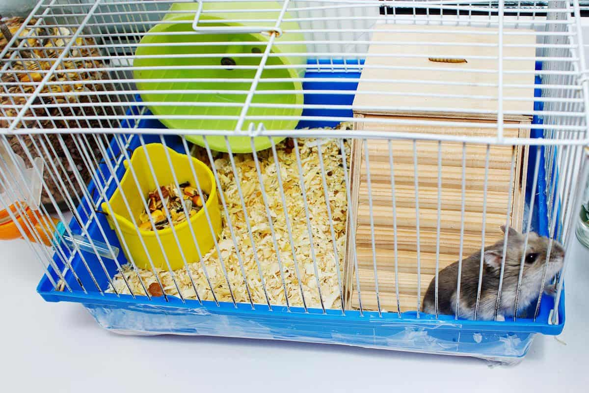 Wire-top hamster cages with exercise wheel