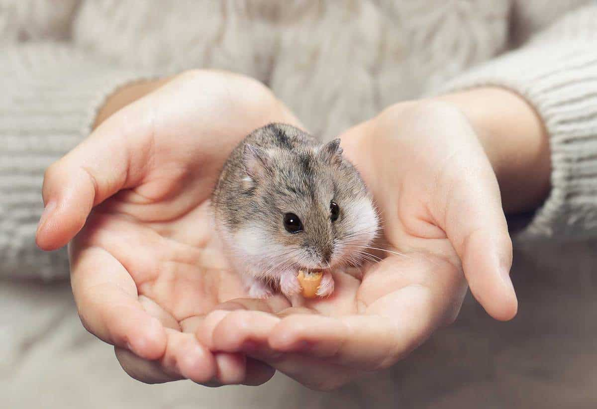 Young person holding hamster with both hands