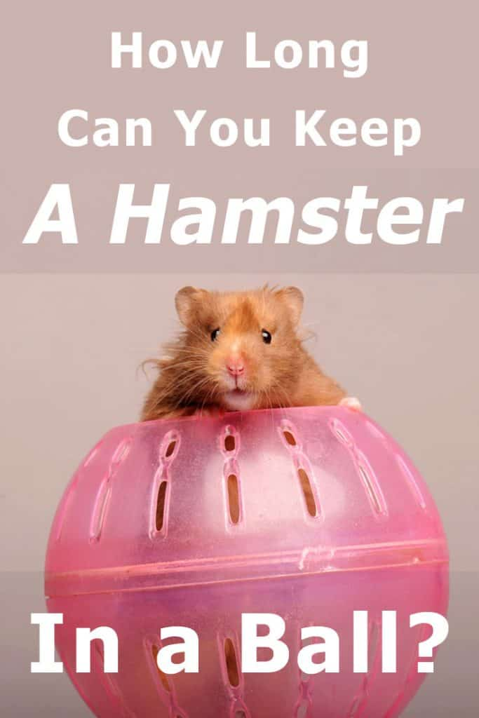How Long Can You Keep a Hamster in a Ball?
