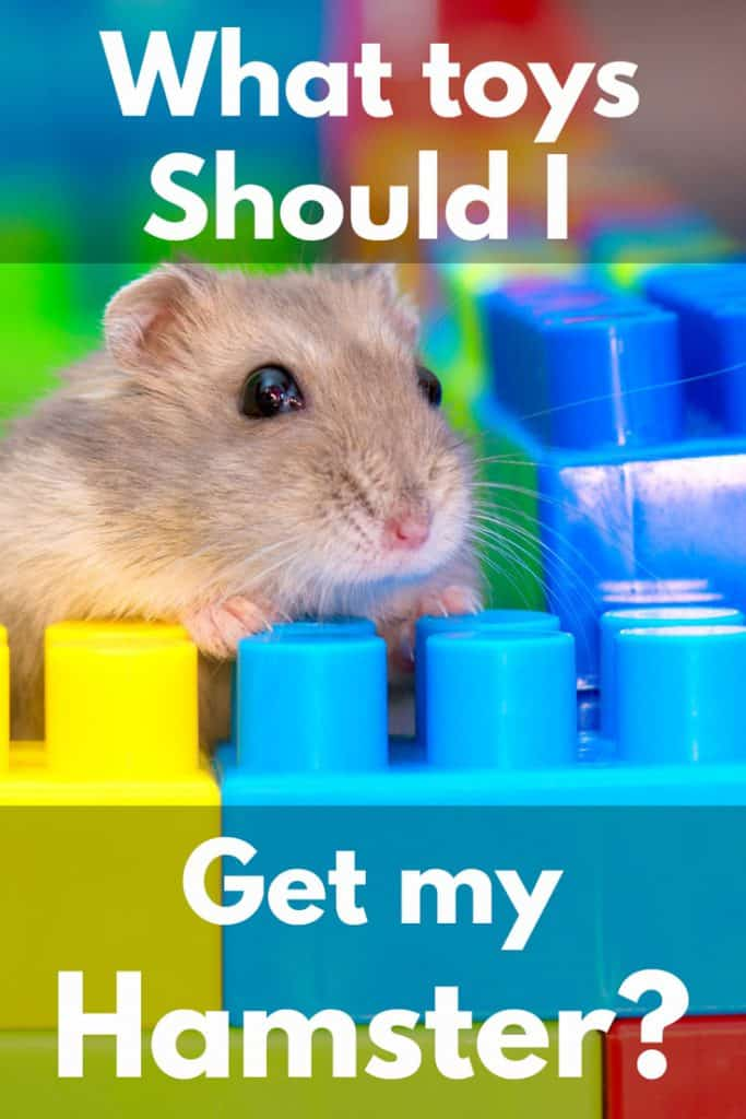 What Toys Should I Get My Hamster?