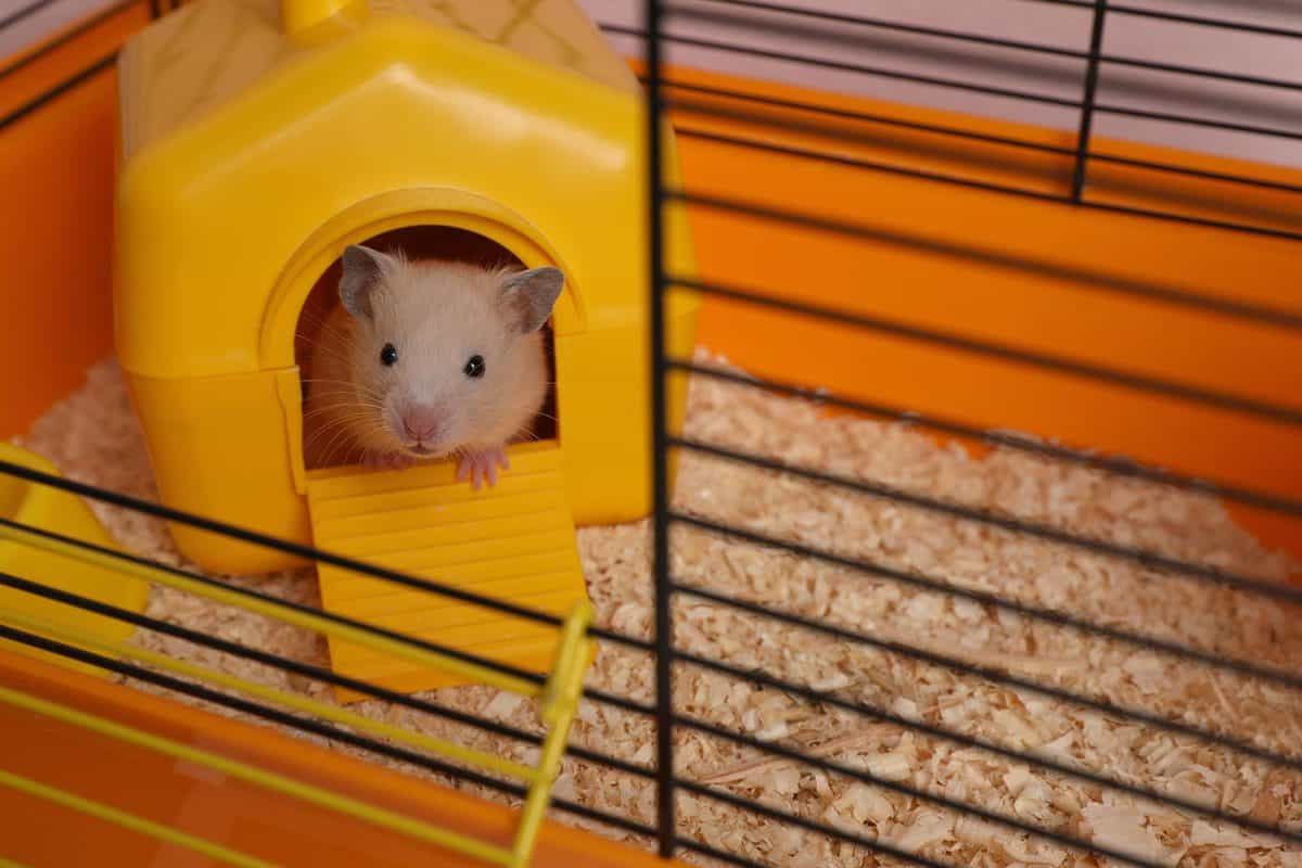 Cute little hamster inside decorative house