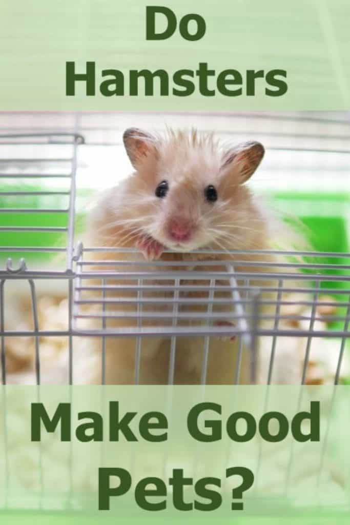 Do Hamsters Make Good Pet?