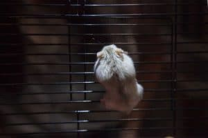 Should You Cover Your Hamster's Cage at Night?