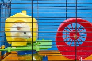 What Should You Put in a Hamster's Cage? (An Owner's Checklist)