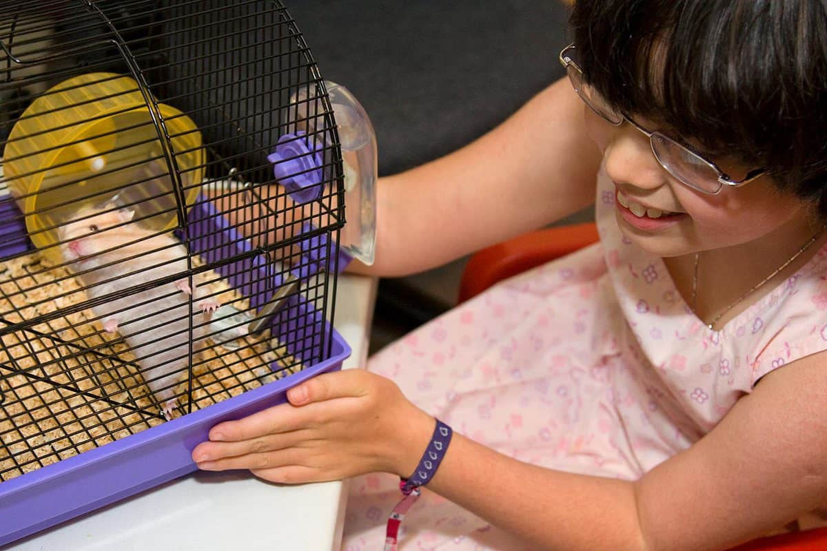 Girl putting her hands on the hamster cage