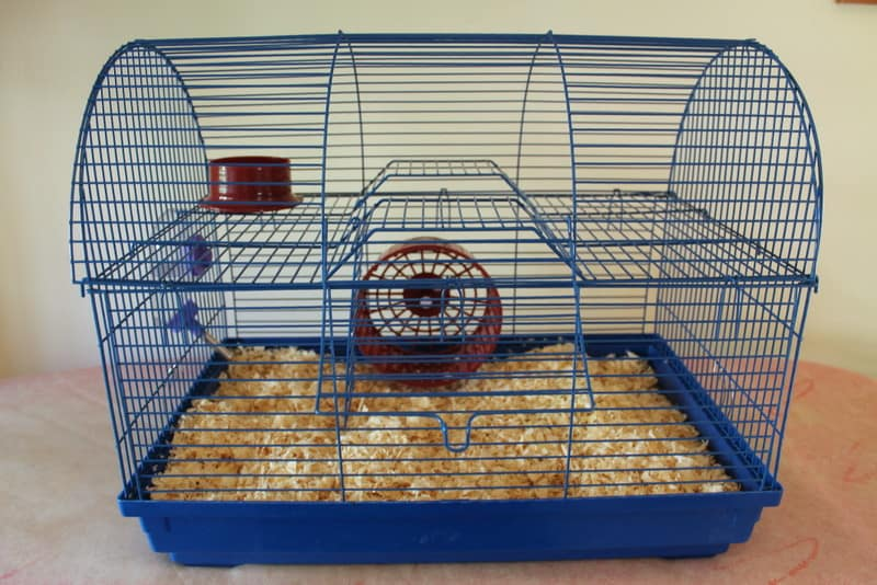 A blue hamster cage with hamster essentials inside