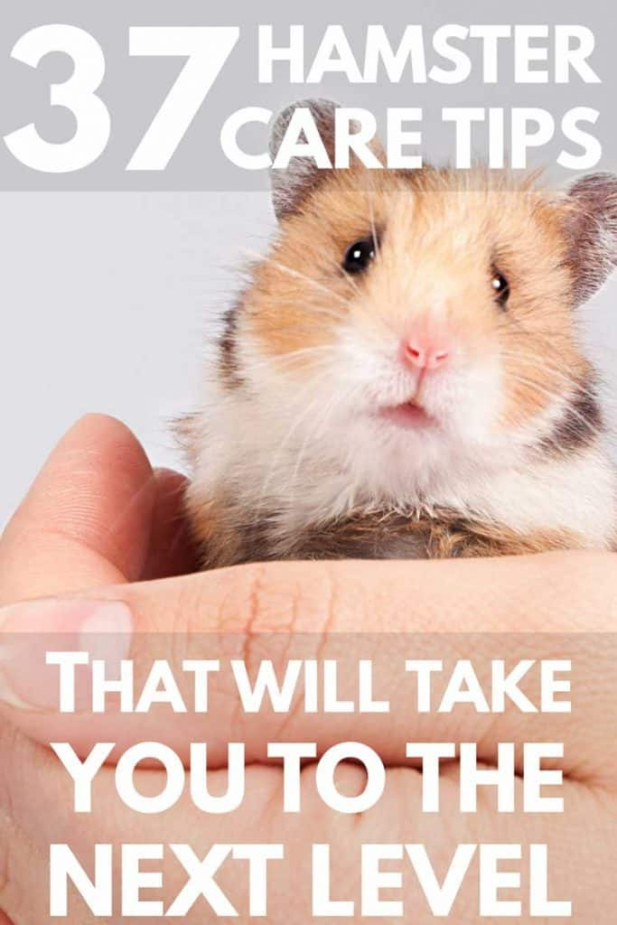 Get our top hamster tips to keep your hamster happy!