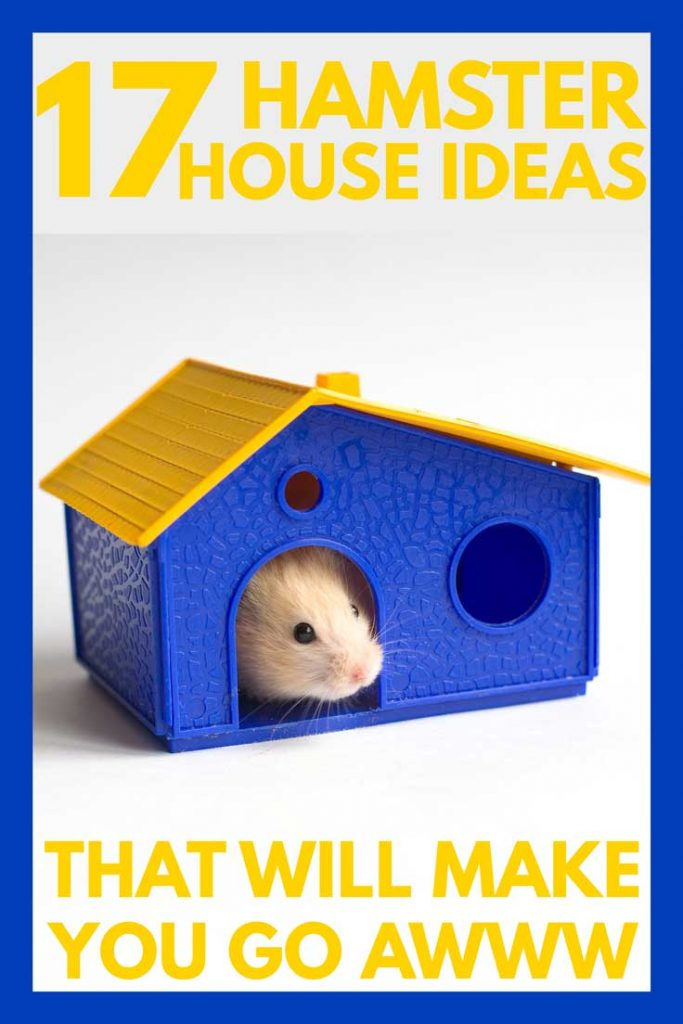 17 Hamster House Ideas That Will Make You Go Awwww