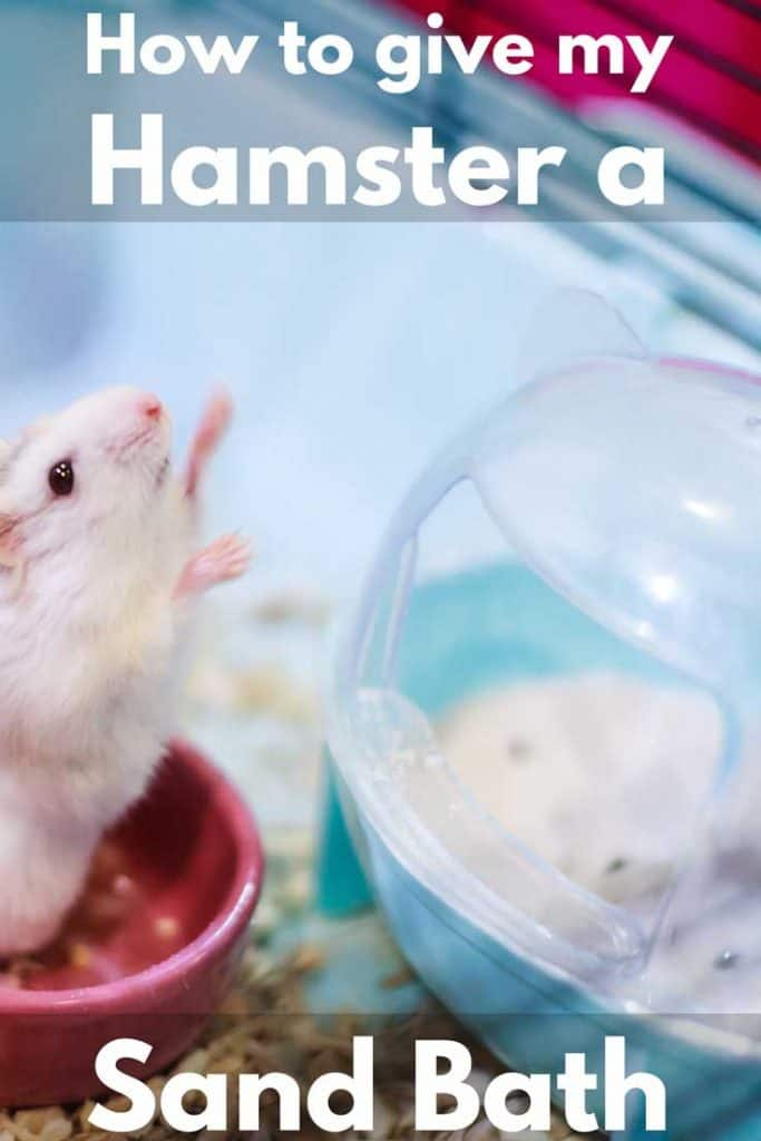 How to Give My Hamster a Sand Bath