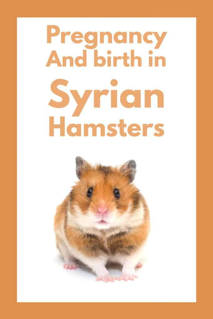 Pregnancy and Birth in Syrian Hamsters