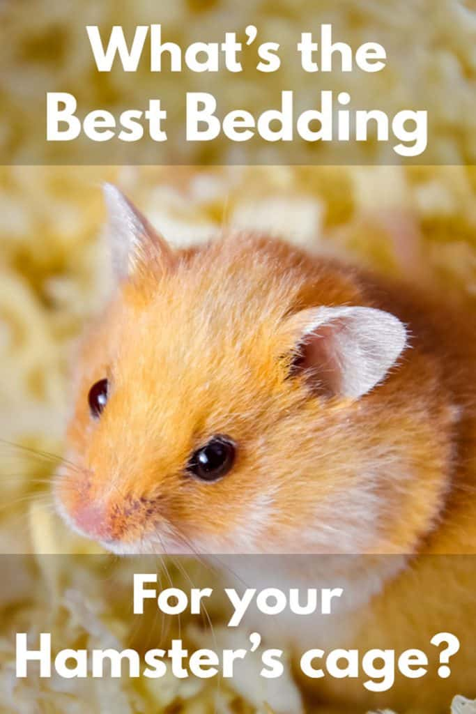 What's the Best Bedding for Your Hamster's Cage