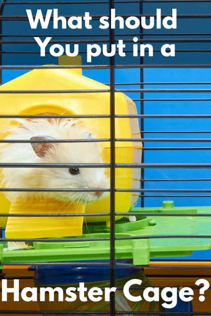 What Should You Put In A Hamster Cage?