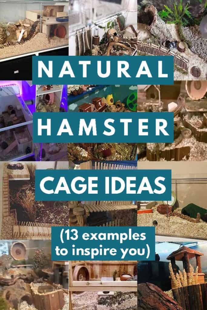 Natural Hamster Cage Ideas (Including 13 Examples to Inspire You)