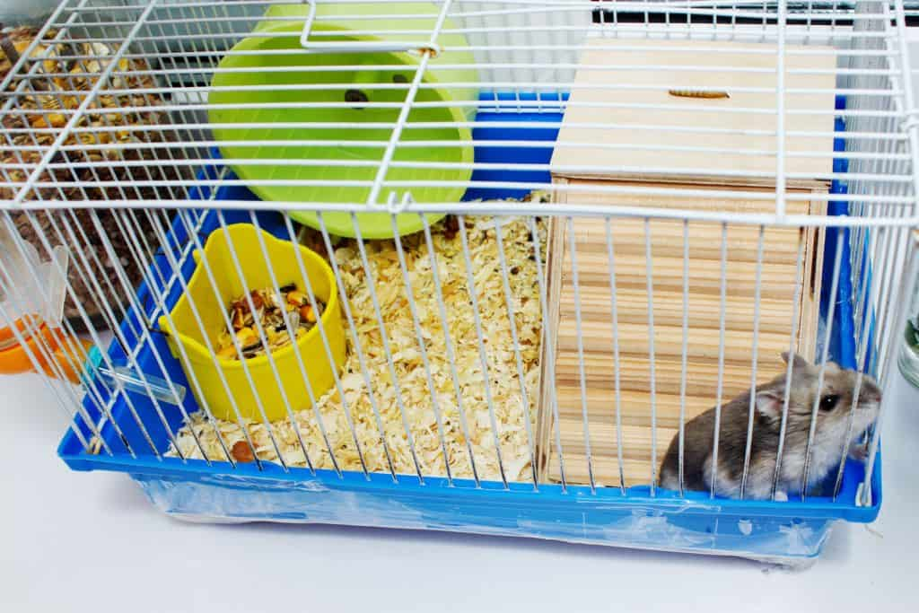 A cute little hamster having fun inside his blue cage