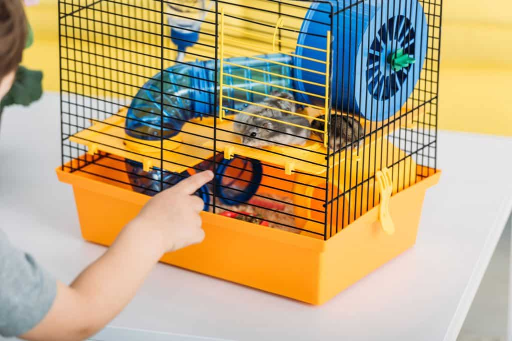 A little boy touching his pet hamster inside his cage