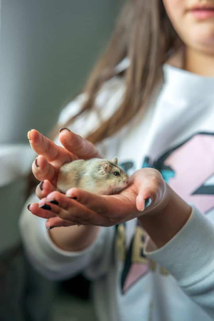 A little girl holding a cute little hamster on her hands