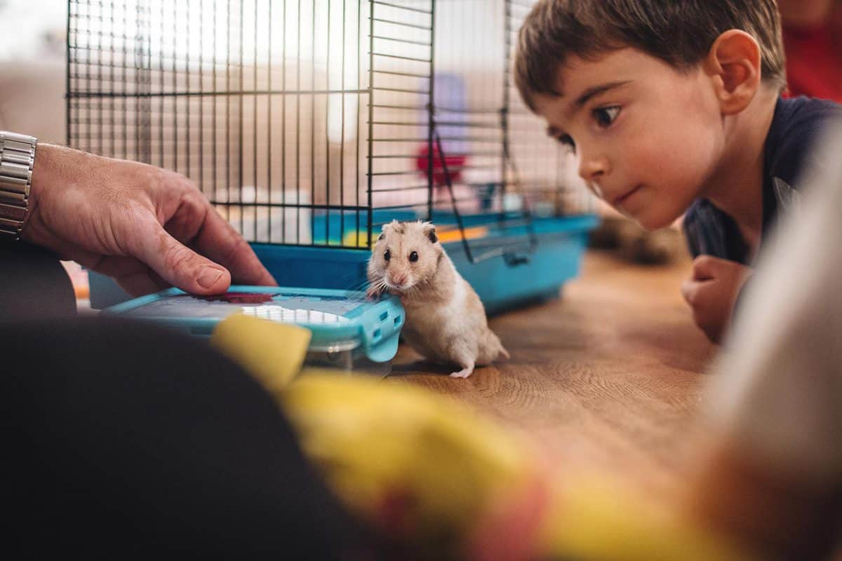 Boy and his father playing with a their new pet hamster