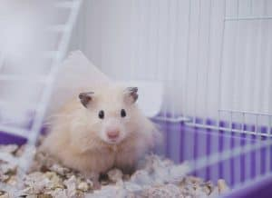 How to Help a Hamster Adjust to Their New Home