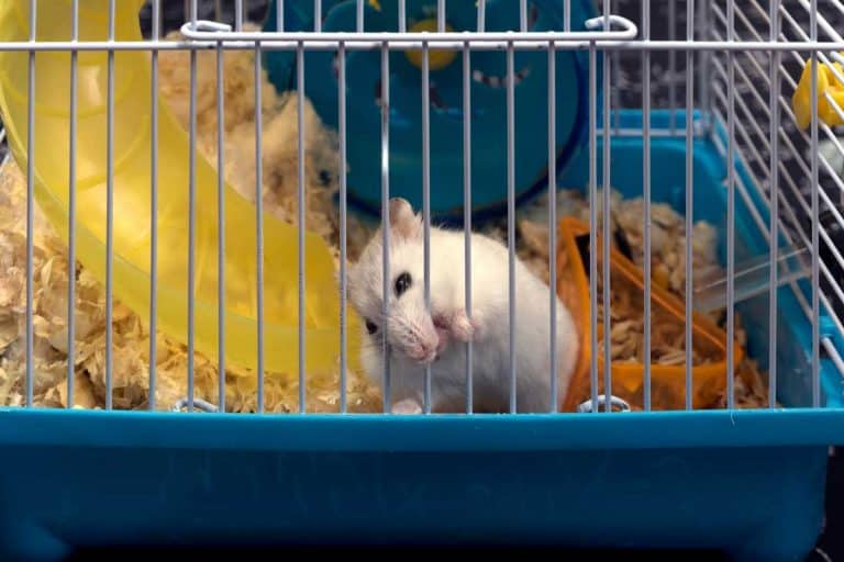 How to Stop My Hamster From Chewing the Bars of the Cage?