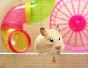 Why and How to Make Hamster Tunnels (The Complete Owner's Guide)