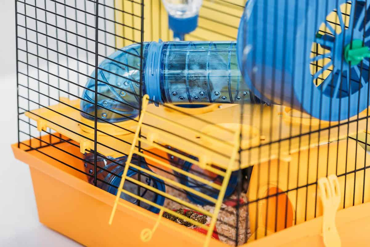 Orange pet cage with hamster inside transparent plastic tunnel