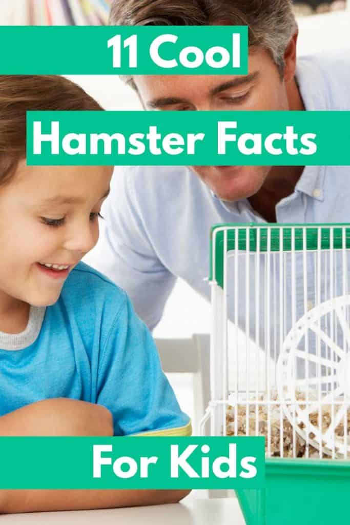 11 Cool Hamster Facts for Kids