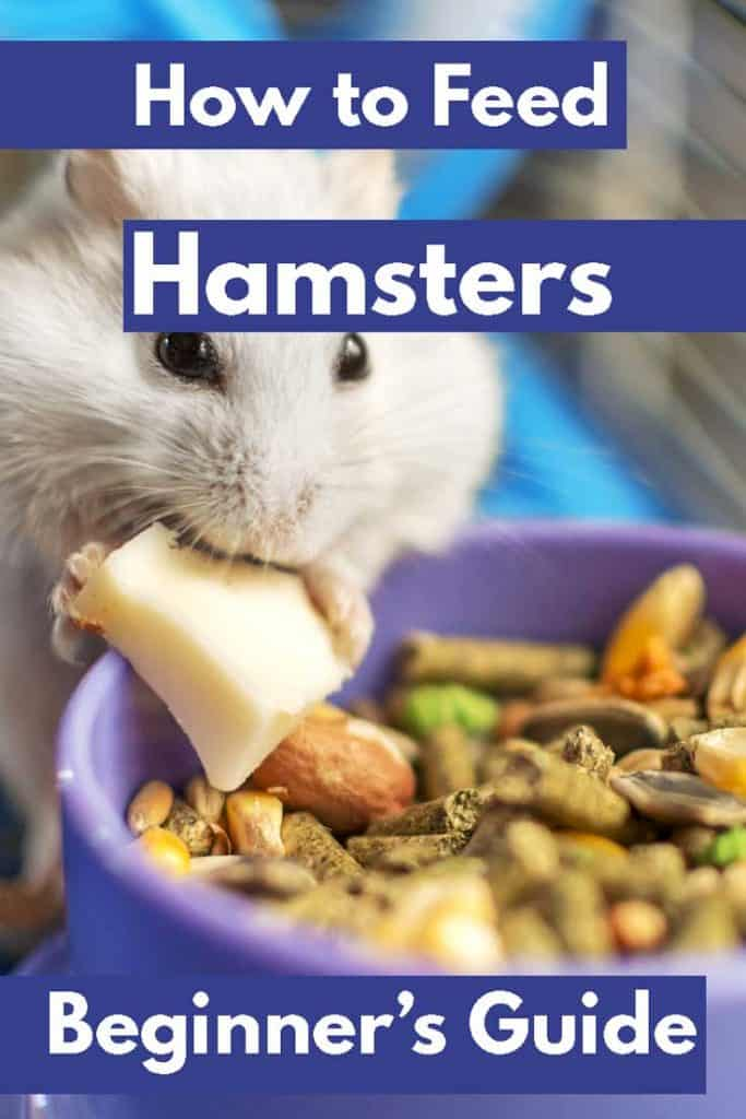 Cute hamster happily eating on its cage, How to Feed Hamsters - A Guide for Beginners