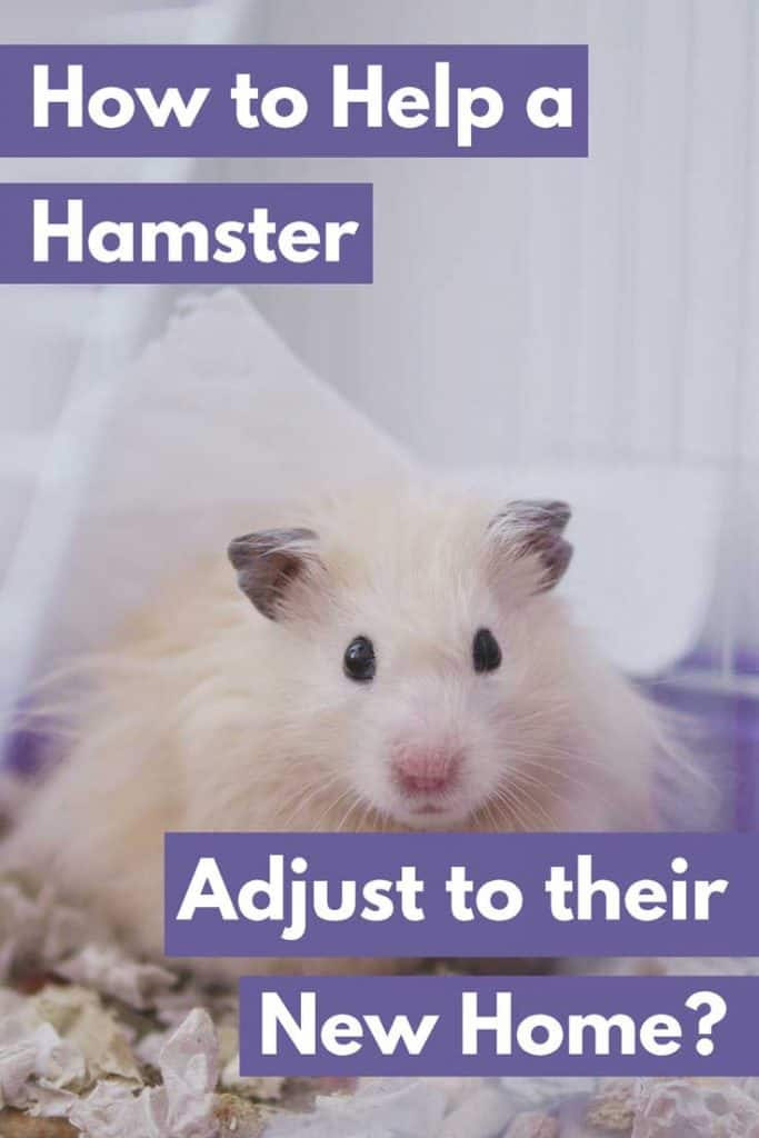 How to Help a Hamster Adjust to Their New Home – Hamsters 101