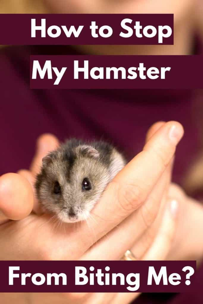 How to Stop My Hamster From Biting Me