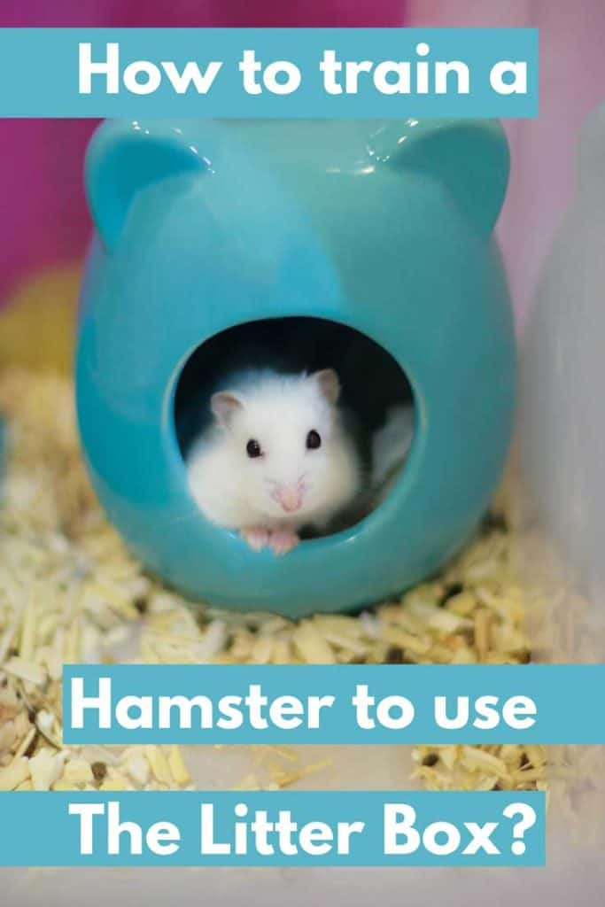 How to Train a Hamster to Use the Litter Box