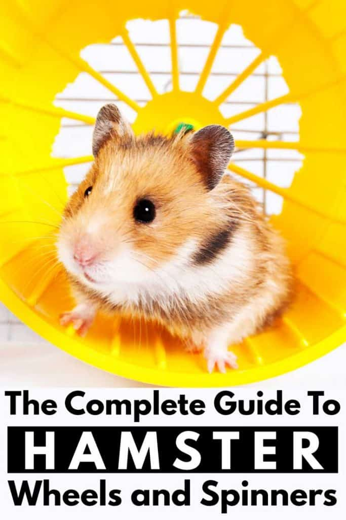 The Complete Guide to Hamster Wheels and Spinners