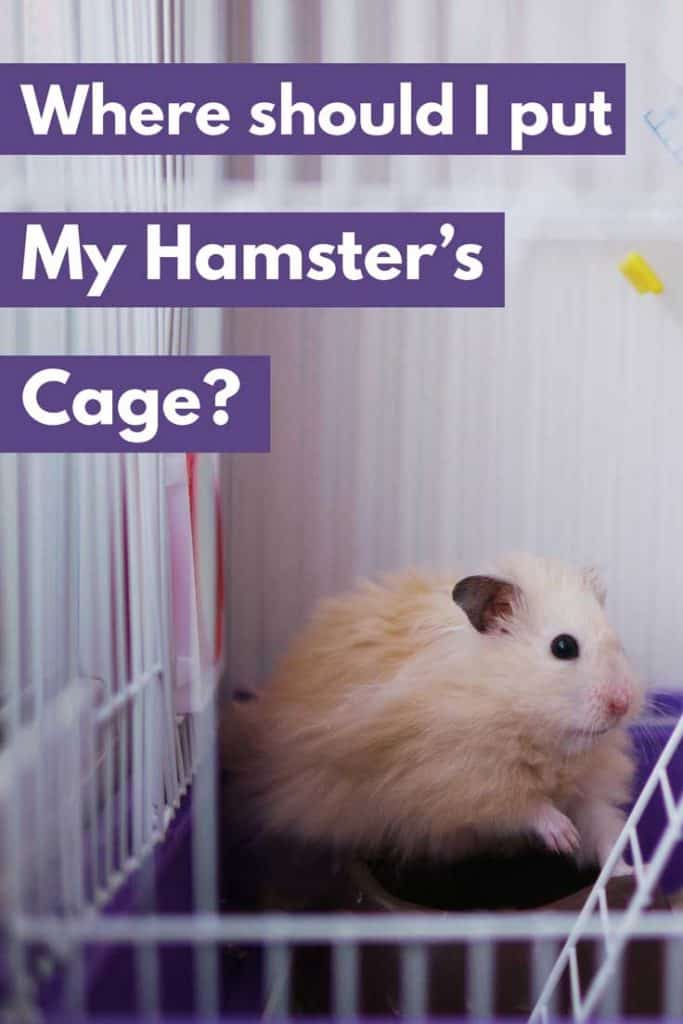 Where Should I Put My Hamster's Cage