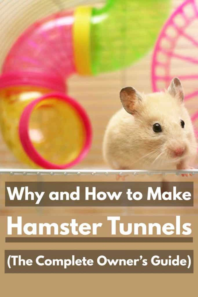 Cute hamster playing around its cage, Why and How to Make Hamster Tunnels (The Complete Owner's Guide)