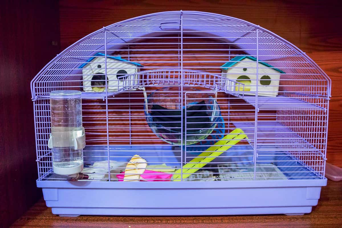 Violet hamster cage with everything a hamster needs