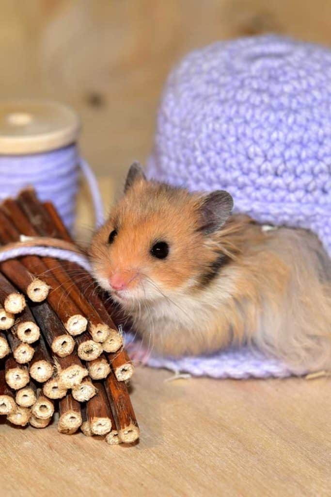 Adorable hamster playing with tiny logs and yarn