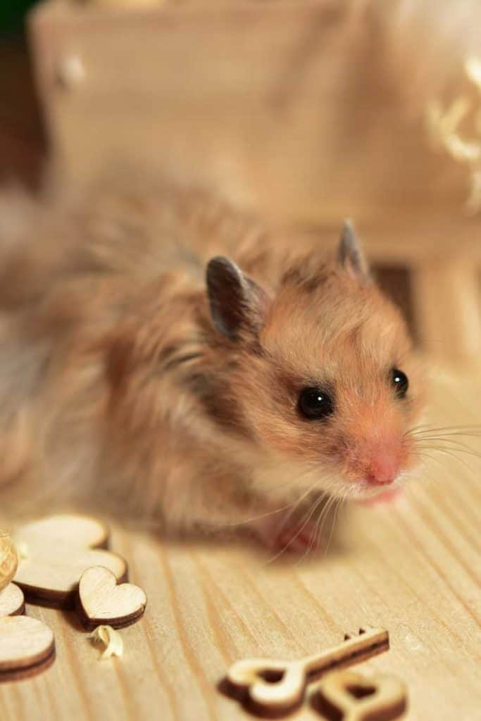 Adorable hamster with heart-shaped and key-shaped toys
