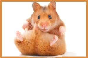Read more about the article 10 Best Hamster Hammocks (And Why you should be getting one!)