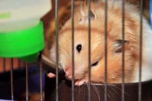 Read more about the article The 9 Best Hamster Water Bottles