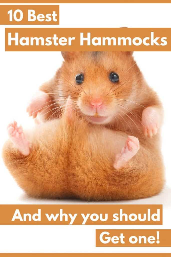 10 Best Hamster Hammocks (And Why you should be getting one!)