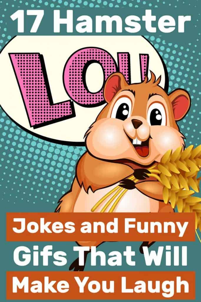 Comic cartoon hamster with rice grain, 17 Hamster Jokes and Funny Gifs That Will Make You Laugh