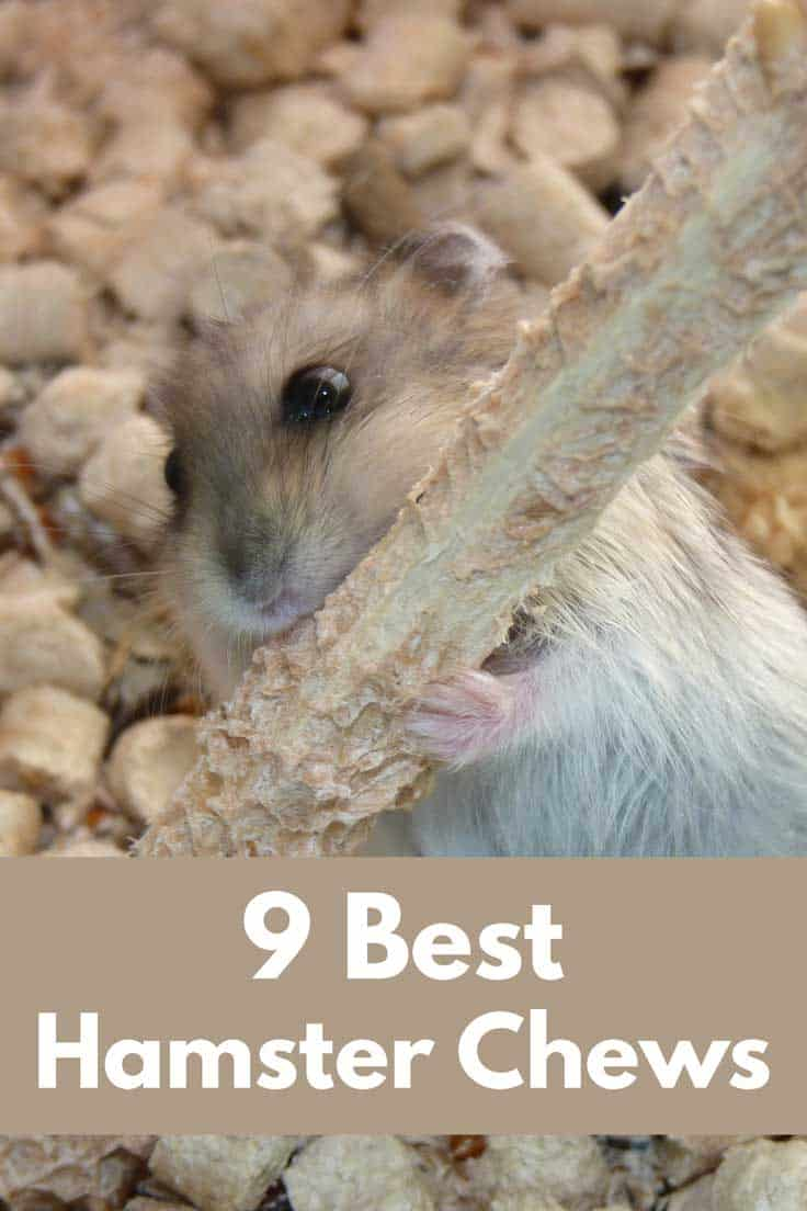9 Best Hamster Chews (Get these and your hammy will thank you!)