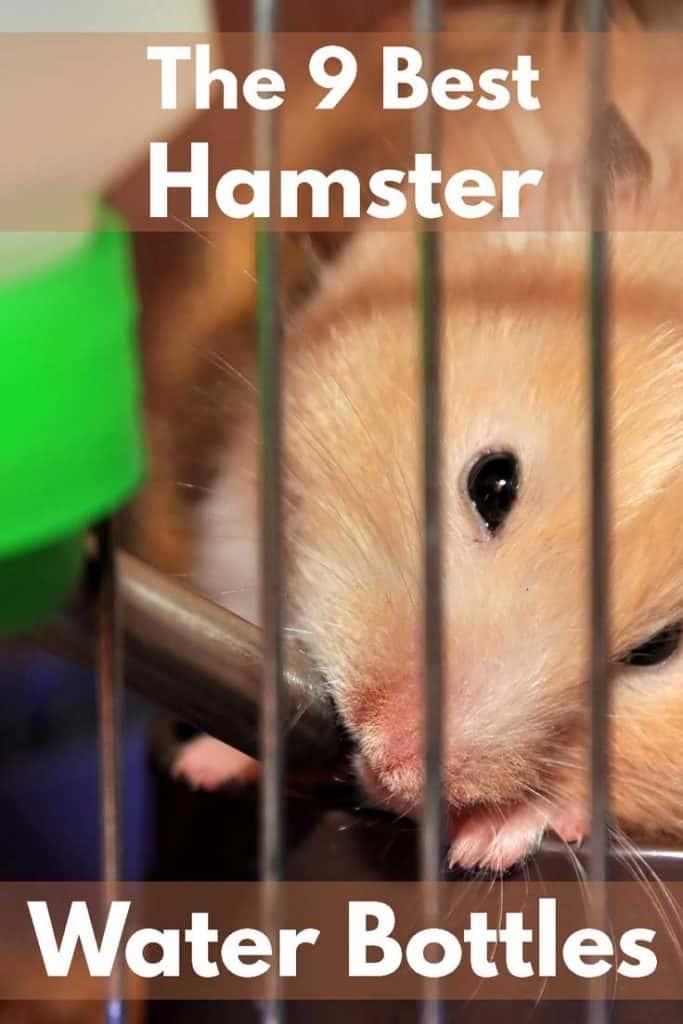 The 9 Best Hamster Water Bottles