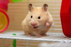 25 Ways to Make Your Hamster Happy