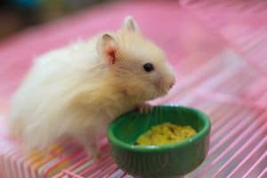 Read more about the article 8 Adorable Hamster Bowls That Will Make Both Your Hamster and You Happy