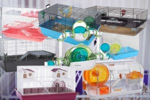 Top 8 Dwarf Hamster Cages (That Could Make Your Hammy Very Happy!)
